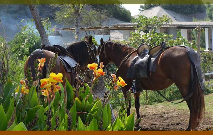 caballos-sierra-de-gredos