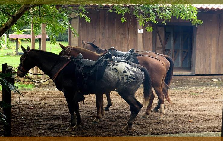 donde-montar-a-caballo-avila